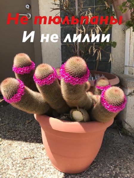Мем, Lich