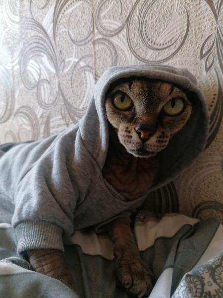 Мем: Кот в пальто, Jane