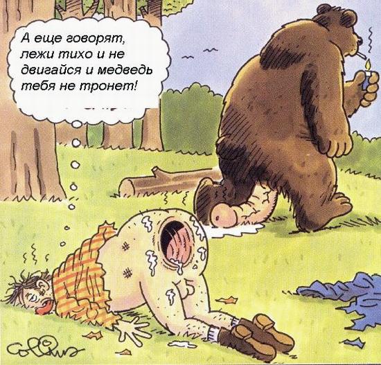 Карикатура: Медведь, Дмитрий