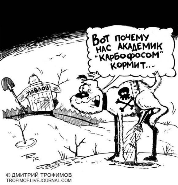 Карикатура: Огород Павлова, Трофимов Дмитрий