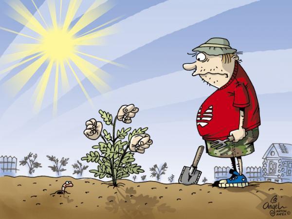Карикатура: Развесистая Дуля, АнтонАнгел