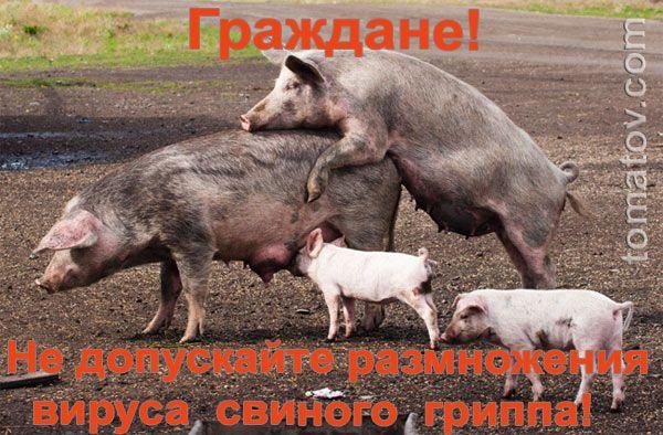 Карикатура: Предохраняйтесь!, Томатов